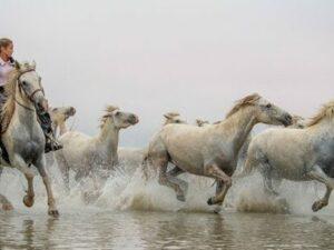photo chevaux camargue marais