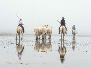 balade à cheval plage