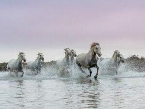 chevaux aux galops dans un marais