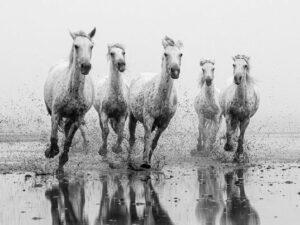 chevaux au galop dans l'eau