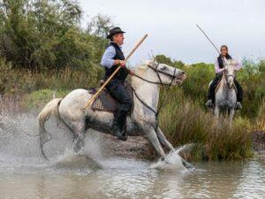 photo cheval camargue qui rue