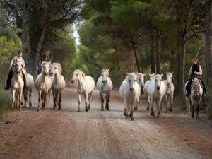 photo chevaux lande camarguaise